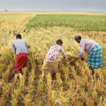 Seminar on Food Systems and Nutrition Addresses 21st Century Challenges